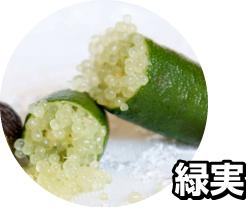 フィンガーライム 苗木 緑実