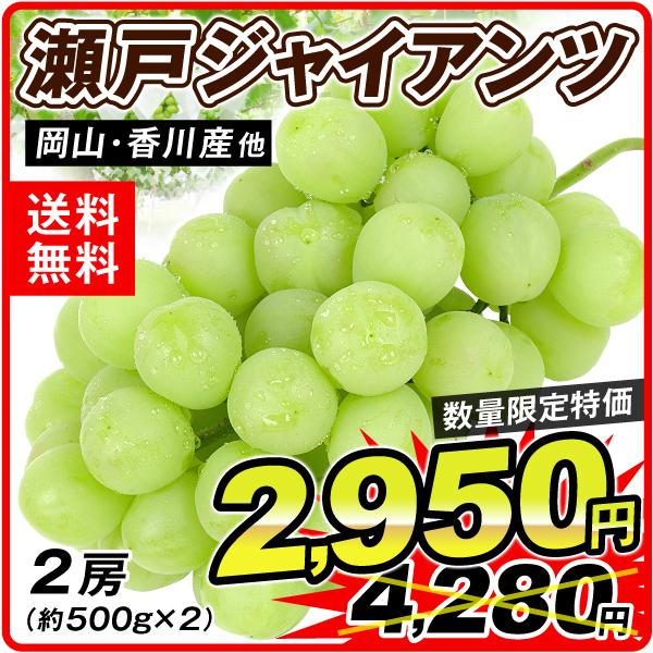 瀬戸ジャイアンツ2950円