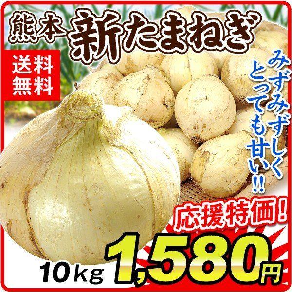 熊本芦北新玉ねぎ10kg