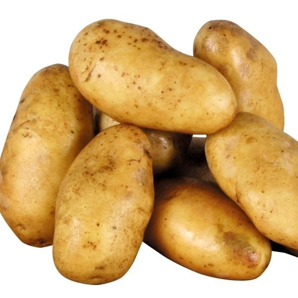 ソーラー式自動給水器
