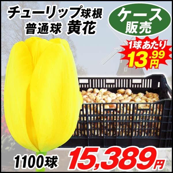 ケース普通球黄
