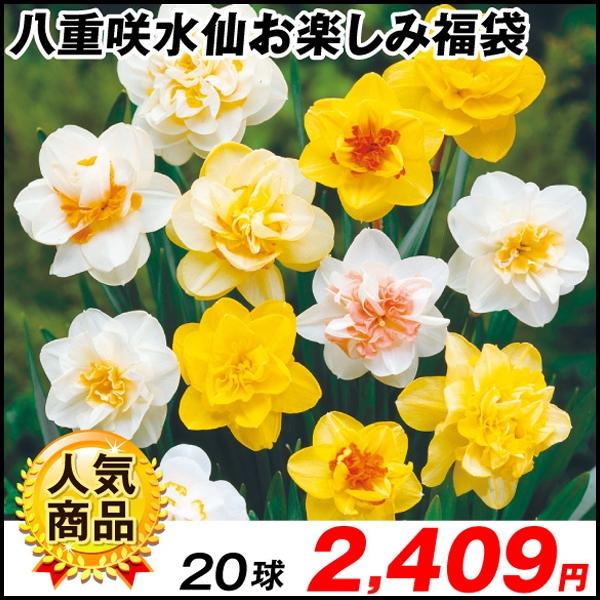 八重咲福袋