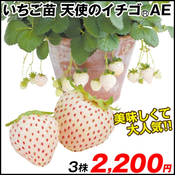 天使のイチゴ