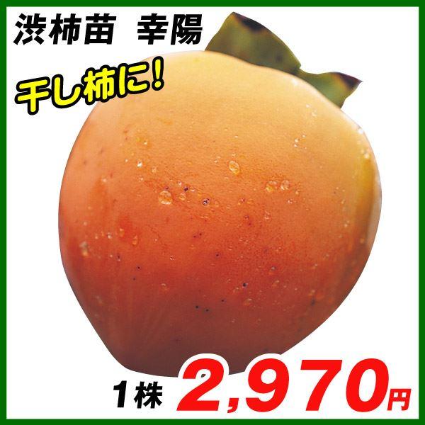 幸陽・渋柿苗