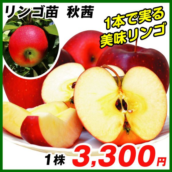 リンゴ・秋茜
