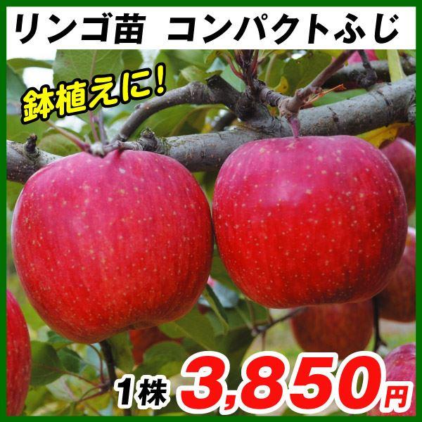 リンゴ・コンパクトふじ