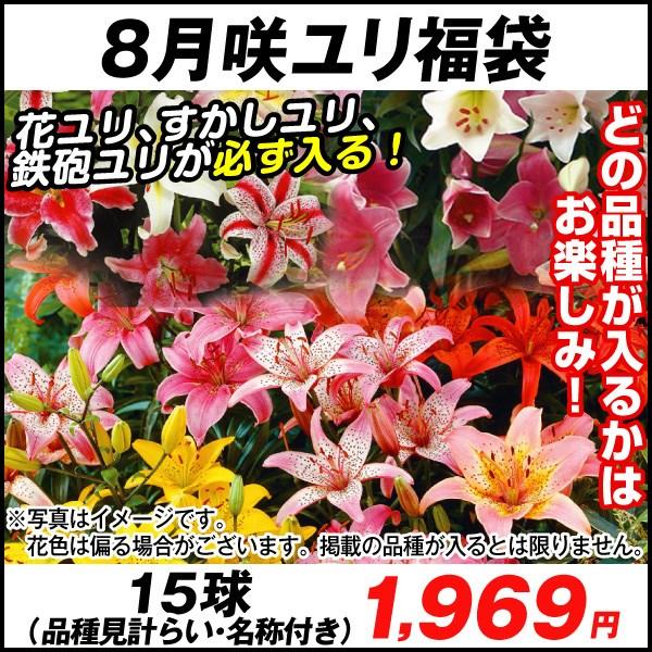 8月咲ユリ福袋_価格