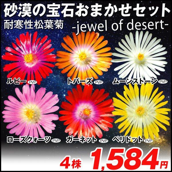 耐寒性松葉菊 砂漠の宝石おまかせセット