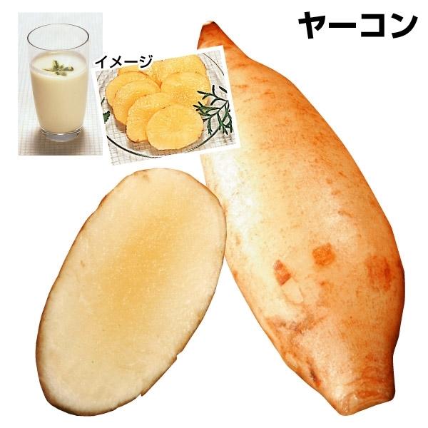 サラダオトメPヤーコン▲ 3株