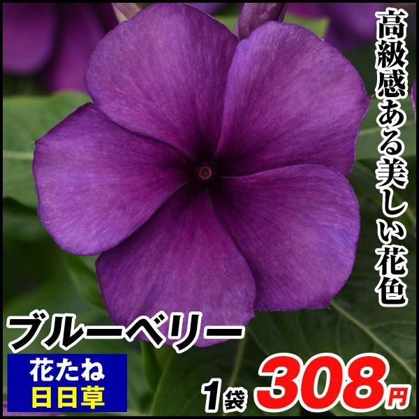 日日草 タトゥーシリーズ ブルーベリー