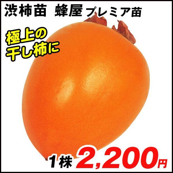 蜂屋プレミアム苗・渋柿苗