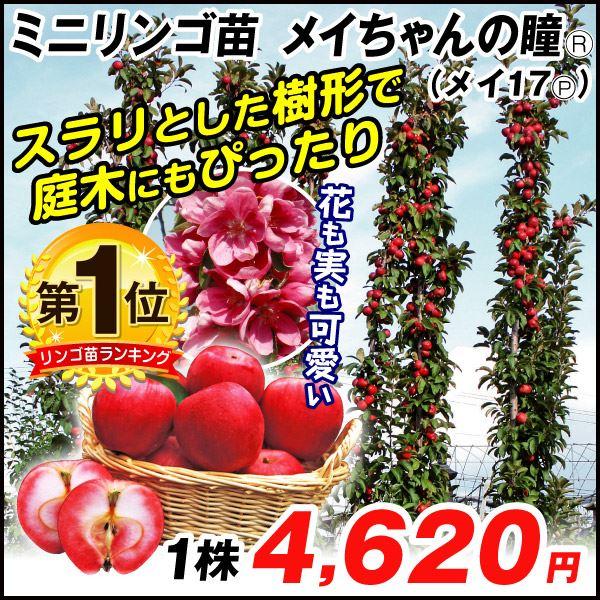 ミニりんご・メイちゃん