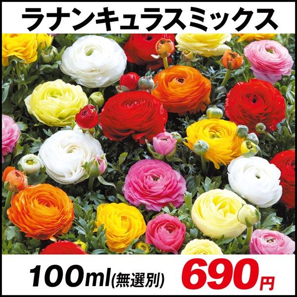 ラナンキュラスミックス (無選別) 100ml