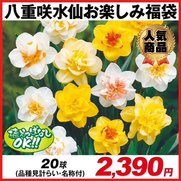 八重咲水仙お楽しみ福袋