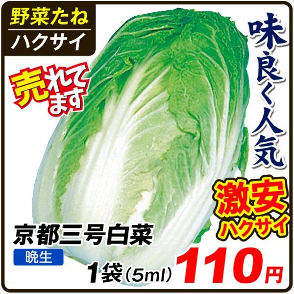 京都三号白菜
