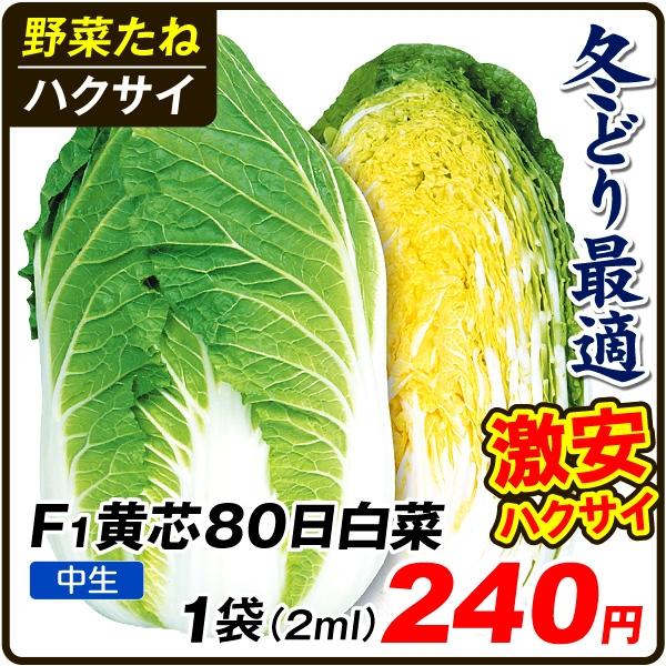F1黄芯80日白菜