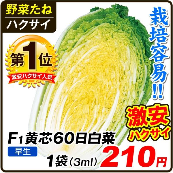 F1黄芯60日白菜