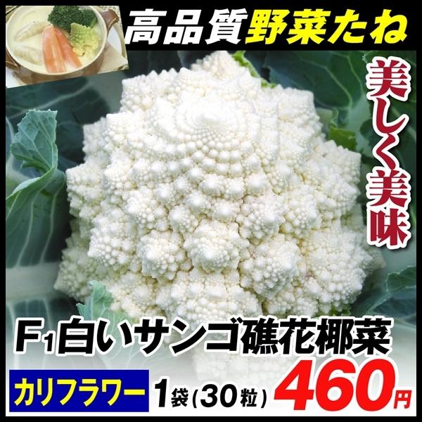 白いサンゴ礁花椰菜