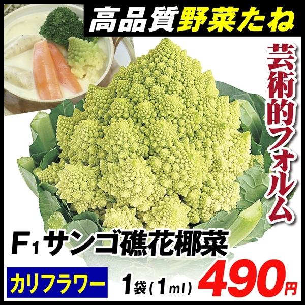 サンゴ礁花椰菜