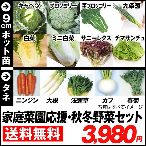 秋冬野菜 野菜タネ&野菜苗