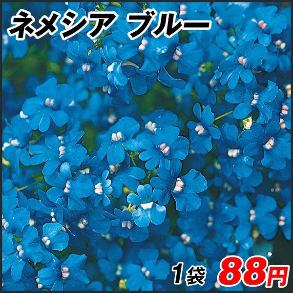 ネメシア ブルー