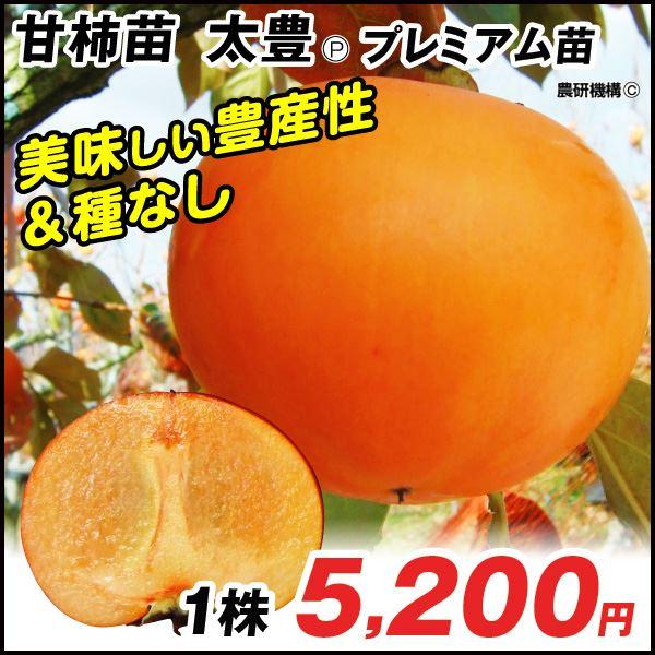 太豊プレミアム 甘柿