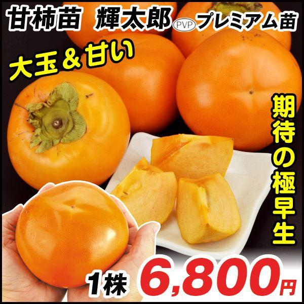 輝太郎プレミアム 甘柿