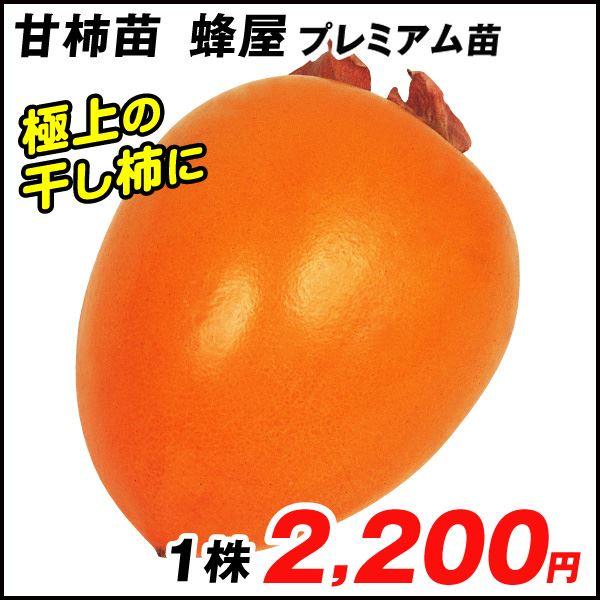 蜂屋プレミアム 渋柿