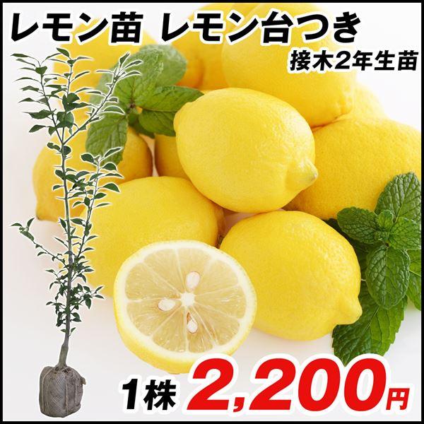 レモン台つき