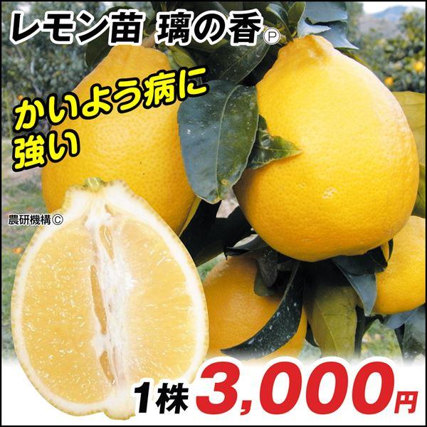 レモン・璃の香