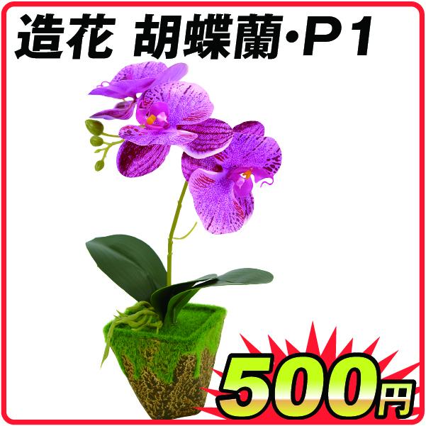 胡蝶蘭P1