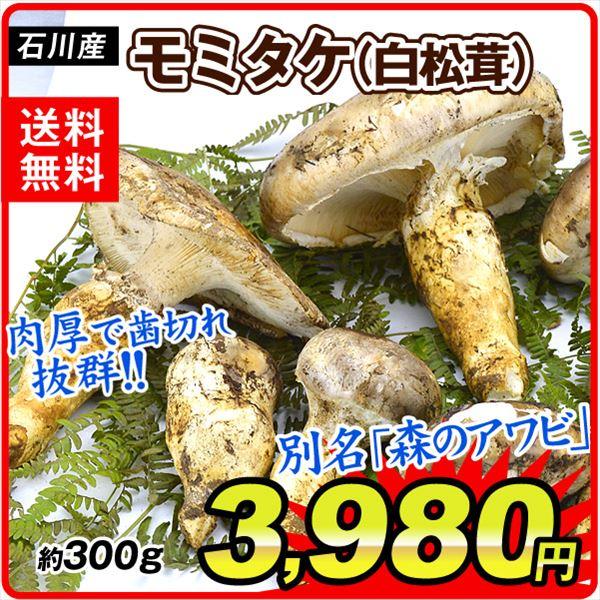 石川モミタケ