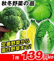 秋冬野菜苗