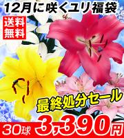 12月に咲くユリ福袋