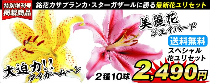 スペシャル花ユリセット