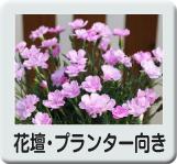花壇プランター向き