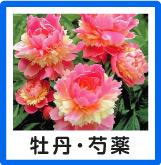 牡丹・芍薬