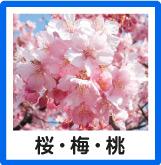 桜・梅・桃