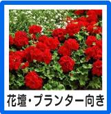 花壇プランター