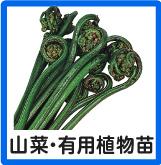 山菜・有用植物