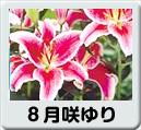 8月咲ゆり