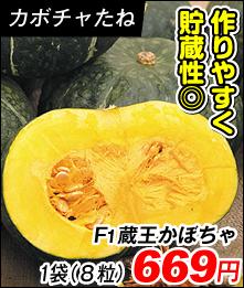 蔵王かぼちゃ