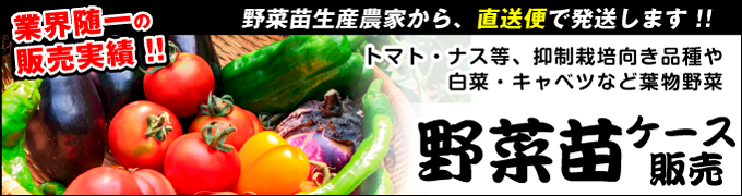 野菜苗ケース販売