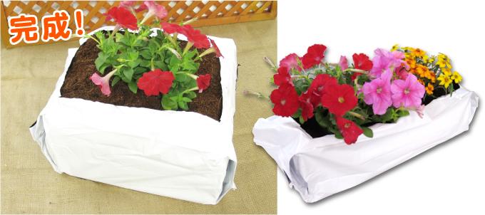 ふくらむ培養土使い方4