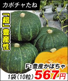 豊産かぼちゃ