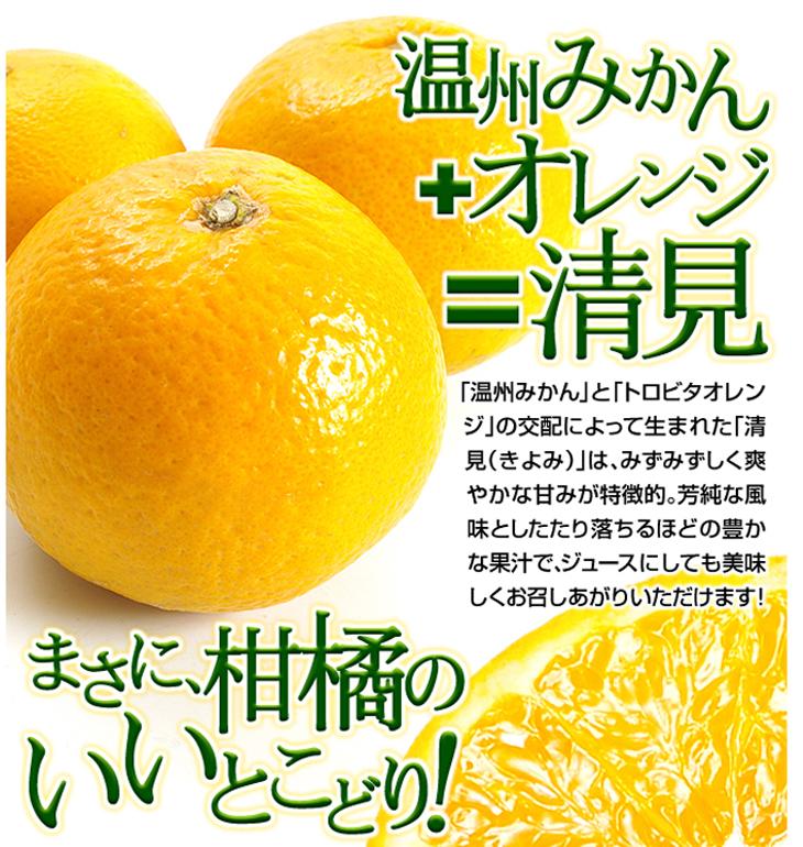 みかんとオレンジのいいとこどり