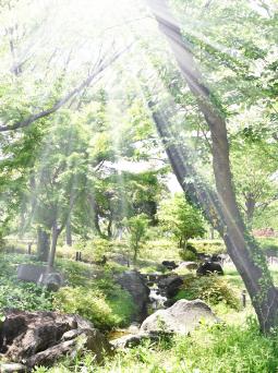ウッドチップ森イメージ