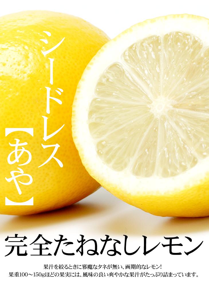 レモン 苗木 シードレスあや