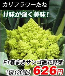 春まきサンゴ礁花耶菜