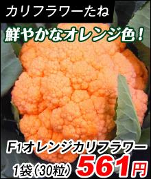オレンジカリフラワー